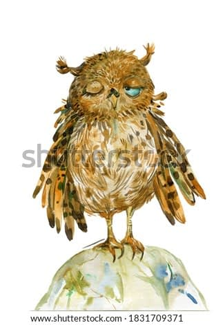 funny little owl .illustration watercolor hand painting