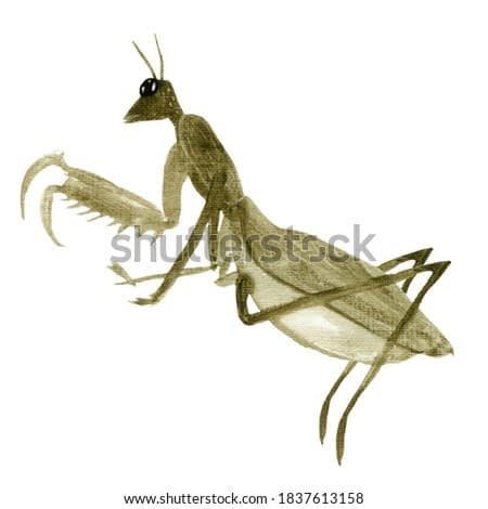 Watercolor oriental vintage mantis elements. Japanese insect. For design of cards, logo, packaging, fabrics, prints, posters.