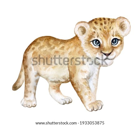 Lion baby, lion cub watercolor Isolated on white background. African animal. Watercolor. Illustration