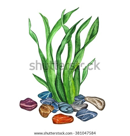 Watercolor sea weed, grass, bush, stones isolated on white background. Hand painting on paper