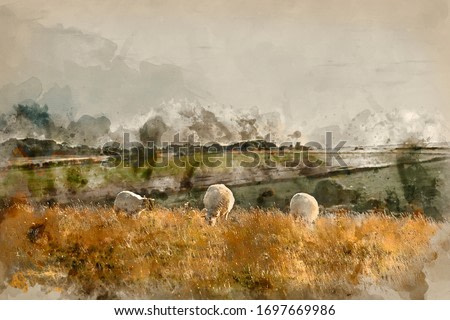 Digitally created watercolor painting of Beautiful Summer evening landscape image of sheep grazing in English countryside