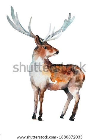 realistic drawing of a deer on a neutral background. watercolor animal illustration