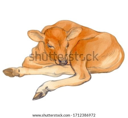 Watercolor painting of a lying calf isolated on white background. Original stock illustration of baby cow.
