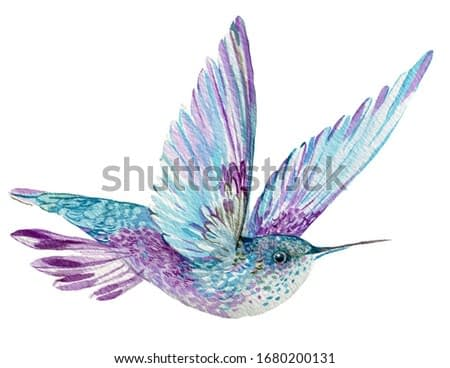 blue bird Hummingbird.watercolor illustration on an isolated white background