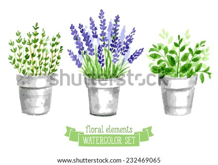 Vector set of provence herbs. Floral watercolor illustration