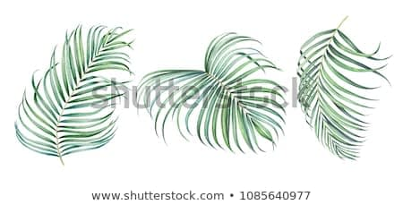 Set of tropical palm branches isolated on white background. Watercolor hand drawn illustration.