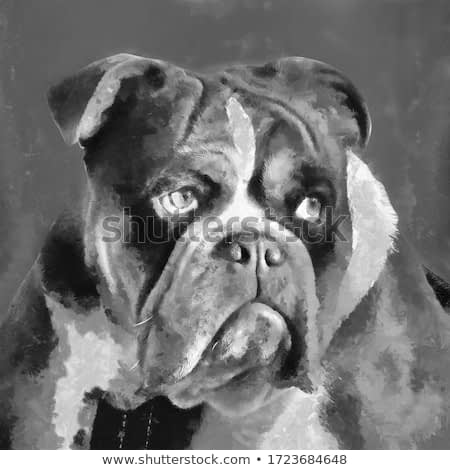 black and white modern colorful oil painting of Bulldog face with splash paint, artist collection of animal painting for decoration and interior, canvas art, abstract parrot on colorful background