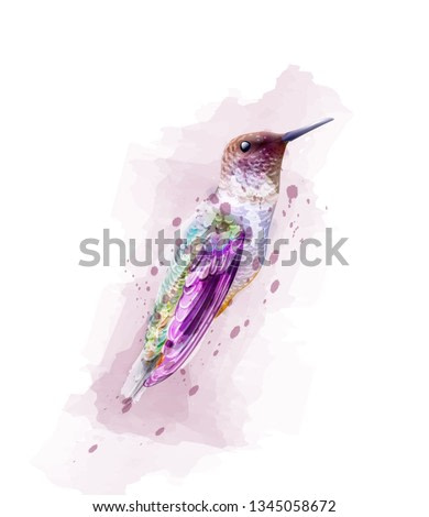 Tropic colorful bird watercolor Vector. isolated on white illustration
