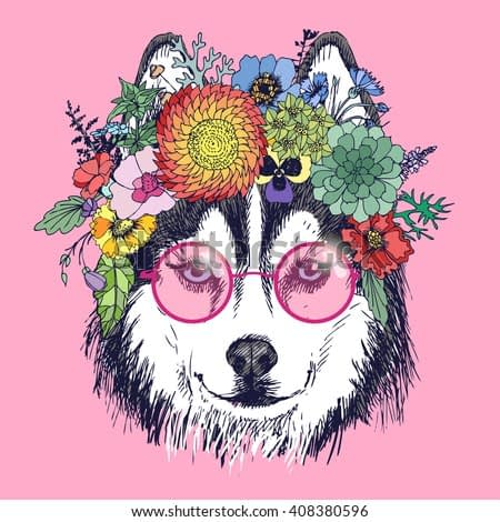 Husky hippie and flowers. Dog portrait in the pink sunglasess. Fashion vector illustration for your blog, logo and other design.