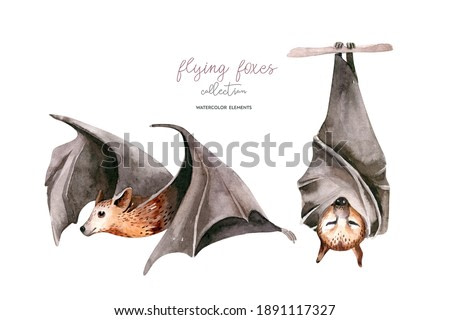Watercolor flyinf fox. Sleeping black fruit bat hanging on on tree branch and flying bar. Nursery illustration. White background.