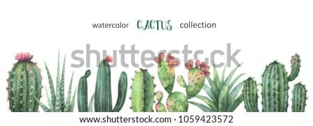 Watercolor banner of cacti and succulent plants isolated on white background. Flower illustration for your projects, greeting cards and invitations.