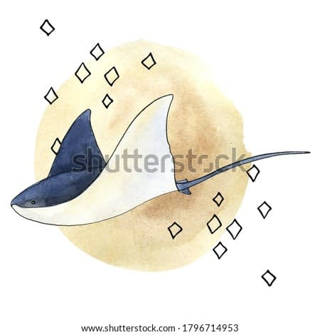 Mistery sea is a collection of high-quality hand-drawn watercolor and line art illustrations of sea animals, abstract shapes and planets, constellations, abstract lines and stars