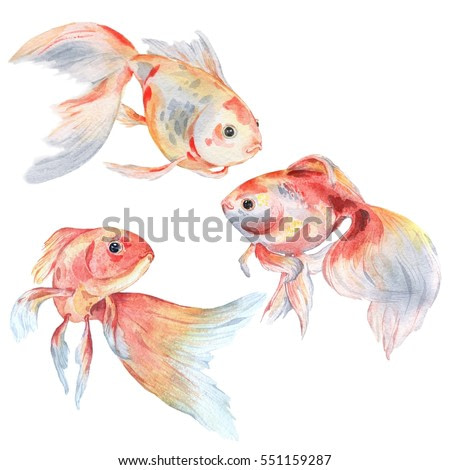 Set of gold fishes. Watercolor painting. Handmade drawing. Isolated on white