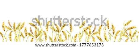 Seamless border of ripe wheat ears. Watercolor banner with yellow plants. The isolated image on a white background.Summer illustration.