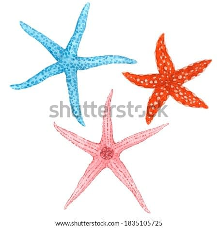 Beautiful set with watercolor starfish. Stock illustration.