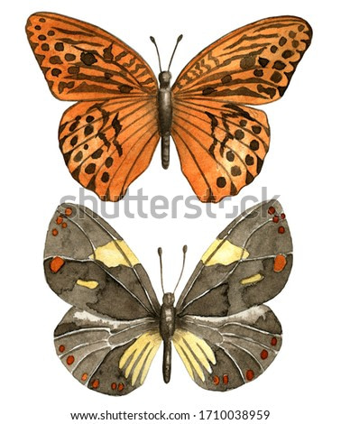 Orange and light brown butterfly watercolor illustration