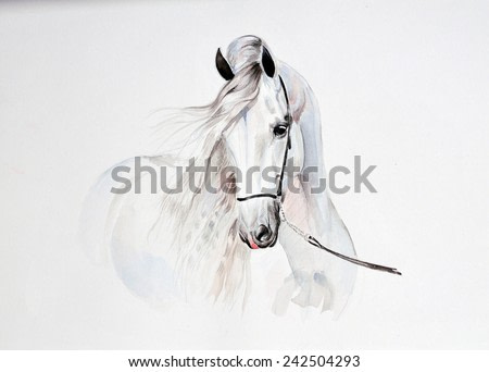 watercolor painting of andalusian horse portrait