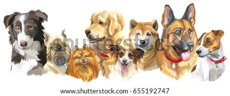 Set of colorful vector portraits of different dog breeds isolated on white background