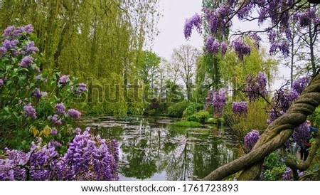 Monet's gardens in Giverny France. Place to relax and enjoy the beautiful landscaping, gardening, flowers and roses. Art and admiration.