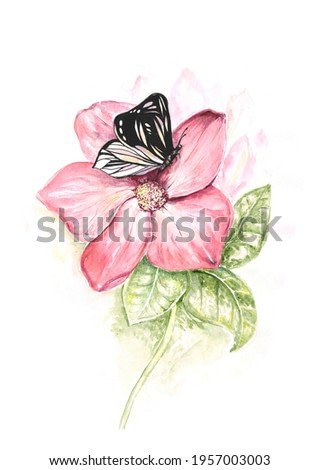 Pink hibiscus with a black butterfly on the petal, a branch with green leaves. Botanical illustration in watercolor hand-drawn on a white background. Painting with a fantasy flower in the nursery.