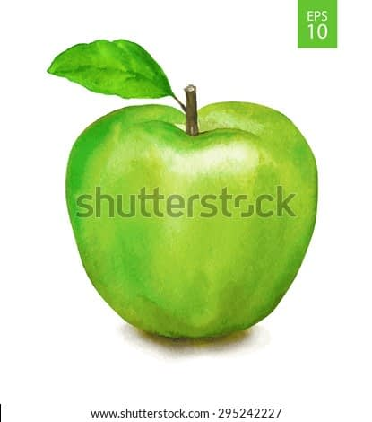 Green apple. Watercolor drawing. Vector illustration