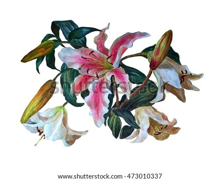 Colorful bouquet of lilies, isolated on white background. Floral background. Botanical illustration. Watercolor painting.