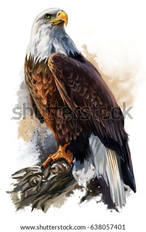 bald eagle watercolor painting