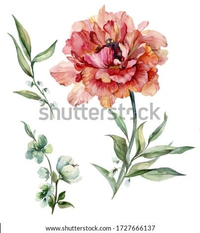 Beautiful purple peony flower on a stem with green leaves. Set flower and bud isolated on white background. Watercolor painting. Hand drawn and painted floral illustration.Greeting cards design.