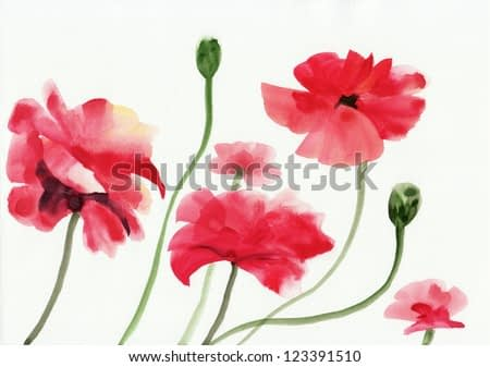 Original art, watercolor painting of red poppies