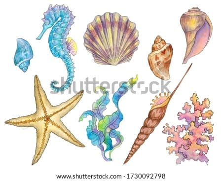 Set of watercolor illustrations with a marine plot. Seahorse, shells, starfish, corals, algae isolated white background.
