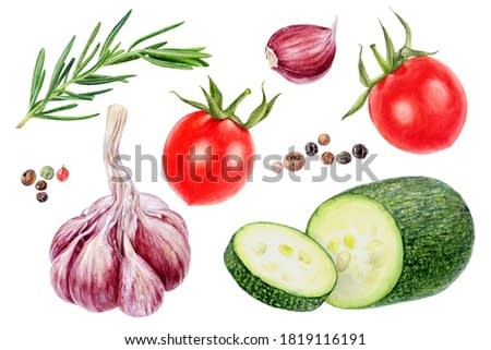 Garlic rosemary tomatoes peppercorns zucchini set watercolor painting isolated on white background
