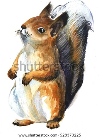 red squirrel on white background. watercolor sketch, illustration animal.