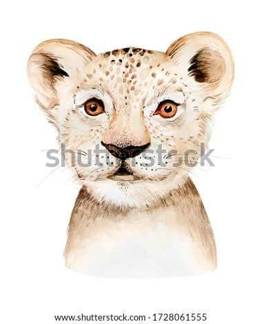 Africa watercolor savanna lion, animal illustration. African Safari wild cat cute exotic animals face portrait character. Isolated on white poster, invitation design