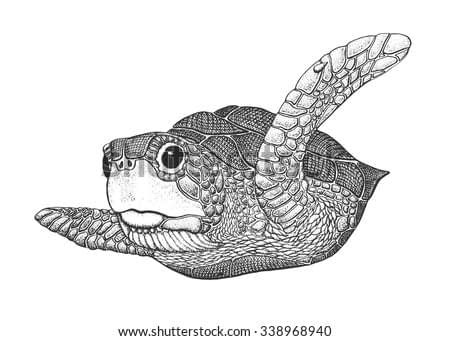 Sea Turtle - Classic Drawn Ink Illustration Isolated on White Background