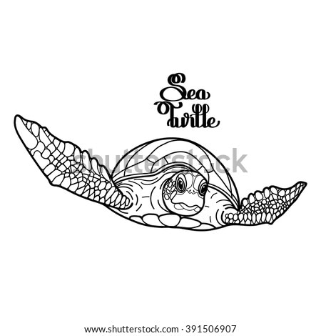 Graphic Hawksbill sea turtle drawn in line art style. Ocean vector creature isolated on white background. Front view. Coloring book page design for adults and kids