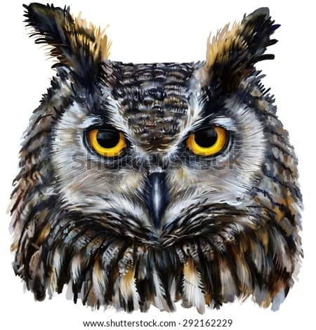 eagle owl  digital painting / eagle owl head