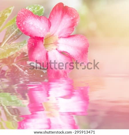 Macro image flowers with water reflection, abstract soft floral background