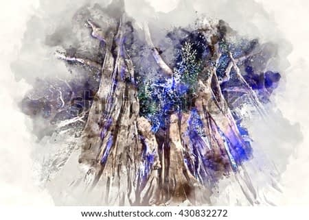 Giant rubber trees in the Plaza Gabriel Miro in Alicante city, Spain. Digital watercolor painting