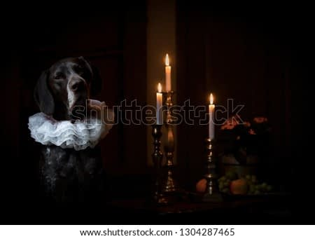 Dog in Rembrandt style sits with 3 lit candles