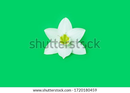 A close up of a white flower on a green background. single item. Copy space