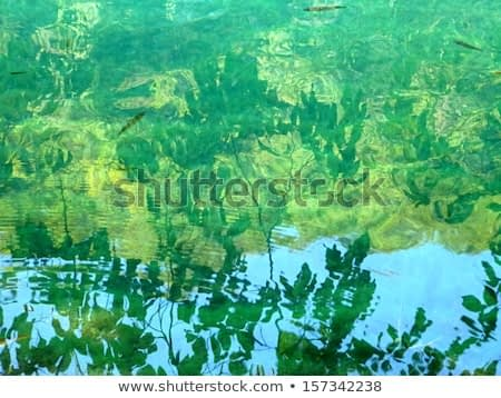 Leaves reflections on a lake surface with fishes