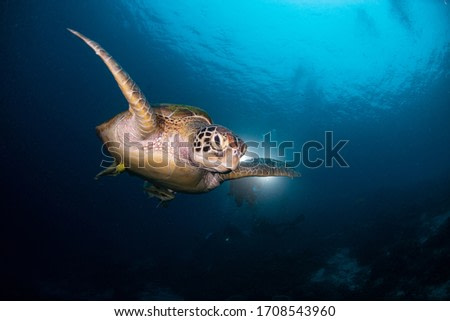 Little turtle  flying in the sea