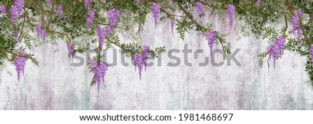 curly flowers wisteria on branches, photo wallpapers