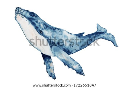 Blue whale watercolor illustration. Hand drawn painting, isolated on white background.