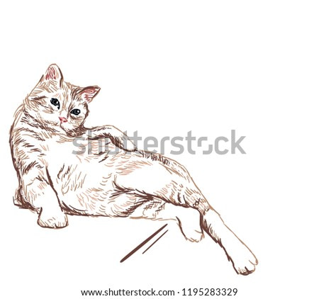 cat lay vector sketch illustration card isolated