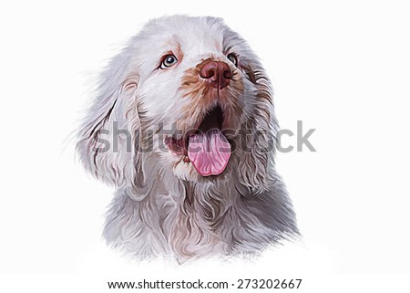 Drawing puppy Spaniel, portrait oil painting on a white background