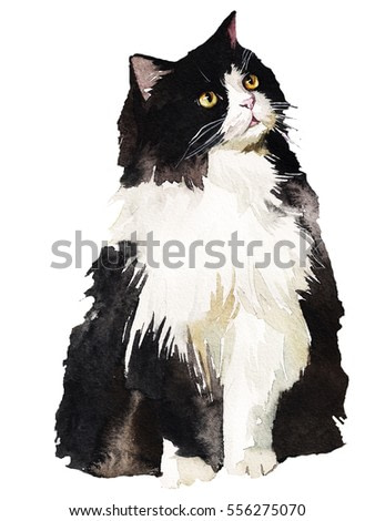 Tuxedo Black and White Fat Fluffy Cat Watercolor Painting Isolated .
