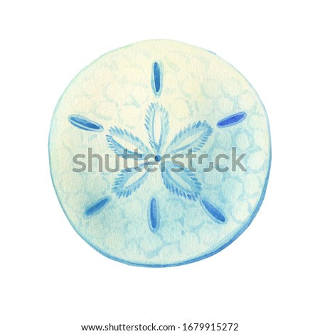 Illustrations of underwater life objects - blue sea shell sand dollar, marine design. Watercolor hand drawn painting illustration isolated on white background.