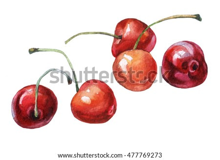 Cherries. Hand drawn watercolor painting on white background.