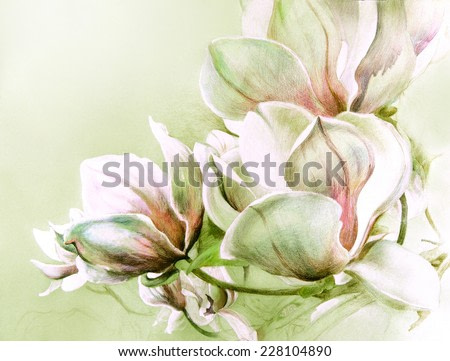 Fabulous magnolia flowers in warm soft tones. Hand illustration - watercolor drawing with colored pencils on  textured paper.